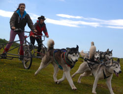 Huskey ride experience Port Haverigg